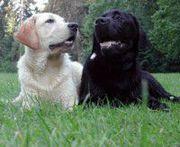 DoggyDating app Honden hebben andere honden nodig