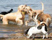 doggydating app samen genieten van het plezier dat de honden beleven