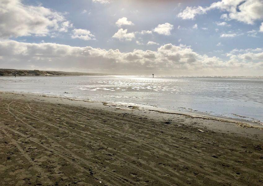 Hond Los Op Het Strand Van Ijmuiden