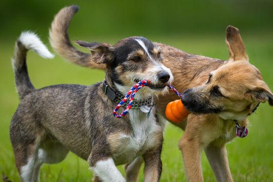Hart voor Dieren over honden app DoggyDating