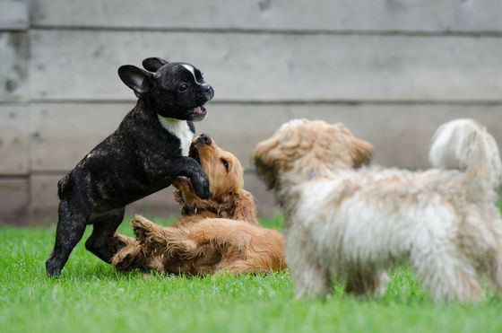 metro Belgie Doggydating: Tinder voor honden