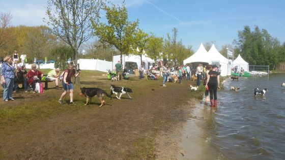 DoggyDating losloopgebied op Animal Event 2016